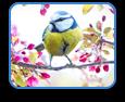 Hébergement L'Oiseau Bleu